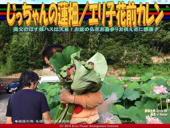 じっちゃんの蓮畑(5)/エリ子花前カレン画像02 ▼画像クリックで640x480pxlsに拡大@エリ子花前カレン