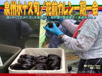 泉州水ナス旬(4)/花前カレン一期一会画像02