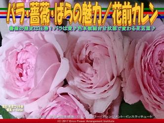 バラ・薔薇・ばらの魅力(2)/花前カレン画像03
