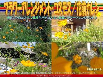 フラワーアレンジ・コスモス(2)/花前カレン画像01
