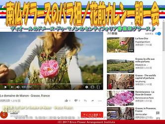 南仏グラースのバラ畑(2)/花前カレン画像03
