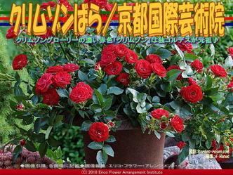 クリムゾンばら(6)/京都国際芸術院画像01▼画像クリックで640x480pxlsに拡大@エリ子花前カレン