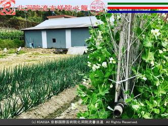 交換ブログ(5)花は花屋/京都国際芸術院画像01 ▼画像クリックで640x480pxlsに拡大@エリ子花前カレン
