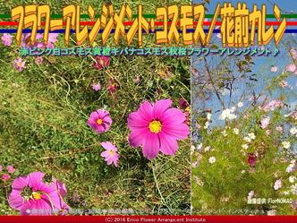 コスモスアレンジ(4)/花前カレン画像01