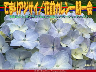 てまりアジサイ(2)/花前カレン画像01
