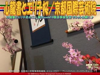 心龍書とエリ子桜(5)/京都国際芸術院画像01 ▼画像クリックで640x480pxlsに拡大@北洞院エリ子花前カレン