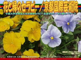 花と緑のセラピー(7)/京都国際芸術院画像01 ▼画像クリックで640x480pxlsに拡大@エリ子花前カレン