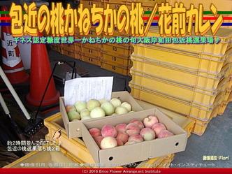 包近の桃/花前カレン画像01