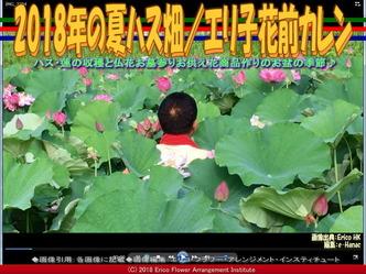 2018年の夏ハス畑(3)/エリ子花前カレン画像02 ▼画像クリックで640x480pxlsに拡大@エリ子花前カレン