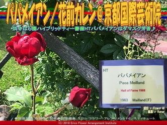 HTパパメイアンDamask/京都国際芸術院画像01 ▼画像クリックで640x480pxlsに拡大@エリ子花前カレン