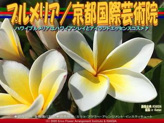 プルメリア/京都国際芸術院画像01 ▼画像クリックで640x480pxlsに拡大@北洞院エリ子花前カレン