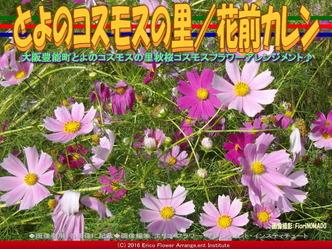秋桜♪コスモス/花前カレン画像01