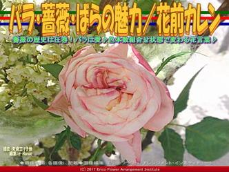 バラ・薔薇・ばらの魅力(3)/花前カレン画像01