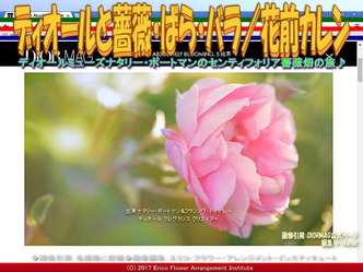 ディオールと薔薇・ばら(2)/花前カレン画像02