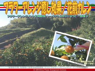 フラワーアレンジ癒し効果(3)/花前カレン画像01 ▼画像クリックで640x480pxlsに拡大@エリ子花前カレン