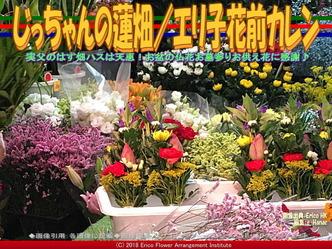 じっちゃんの蓮畑(3)/エリ子花前カレン画像02 ▼画像クリックで640x480pxlsに拡大@エリ子花前カレン