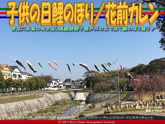 子供の日鯉のぼり/花前カレン画像01
