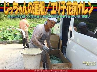じっちゃんの蓮畑(2)/エリ子花前カレン画像01 ▼画像クリックで640x480pxlsに拡大@エリ子花前カレン