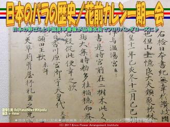 日本のバラの歴史(4)/花前カレン画像02