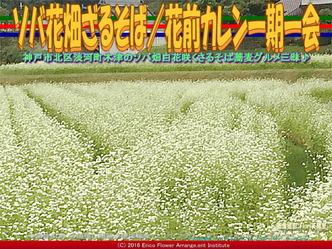 ソバ花畑ざるそば(3)/花前カレン画像02