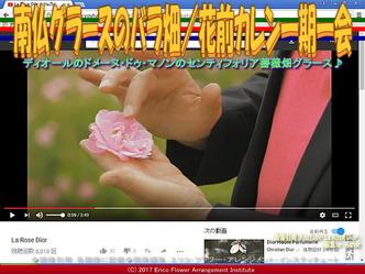 南仏グラースのバラ畑/花前カレン一期一会画像02