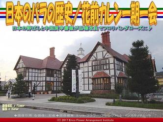 日本のバラの歴史(3)/花前カレン画像01