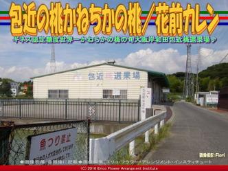 包近桃選果場/花前カレン画像01
