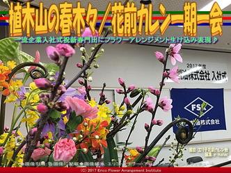植木山の春木(7)/花前カレン一期一会画像03