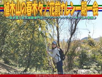 植木山の春木(6)/花前カレン一期一会画像02