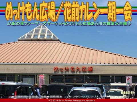 めっけもん広場/花前カレン一期一会画像02
