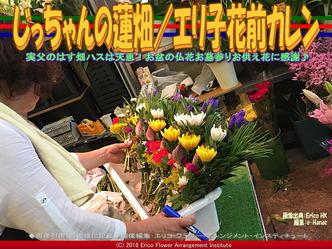 じっちゃんの蓮畑(7)/エリ子花前カレン画像01 ▼画像クリックで640x480pxlsに拡大@エリ子花前カレン
