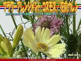 フラワーアレンジメント・コスモス/花前カレン画像02