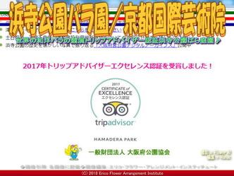 浜寺公園バラ園/京都国際芸術院画像02 ▼画像クリックで640x480pxlsに拡大@エリ子花前カレン
