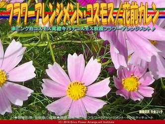 コスモスアレンジ(4)/花前カレン画像03