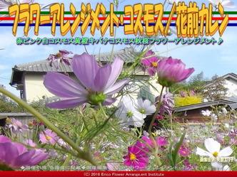 コスモスアレンジ(4)/花前カレン画像02