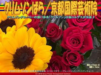 クリムゾンばら/京都国際芸術院画像02 ▼画像クリックで640x480pxlsに拡大@エリ子花前カレン