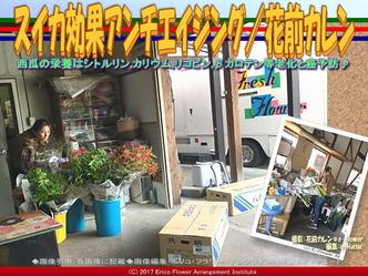 スイカ効果アンチエイジング(5)/花前カレン画像01