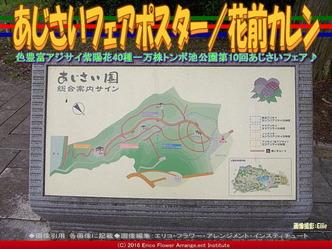 あじさいフェアポスター/花前カレン画像01