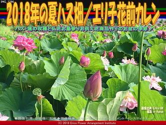 2018年の夏ハス畑(3)/エリ子花前カレン画像01 ▼画像クリックで640x480pxlsに拡大@エリ子花前カレン