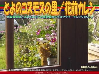秋桜♪コスモス/花前カレン画像03