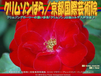 クリムゾンばら(4)/京都国際芸術院画像01 ▼画像クリックで640x480pxlsに拡大@エリ子花前カレン