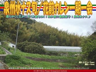 泉州水ナス旬/花前カレン一期一会画像01
