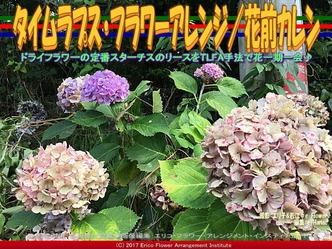 タイムラプス・フラワーアレンジ/花前カレン画像01