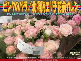 ピンクのバラ/北洞院エリ子花前カレン画像01 ▼画像クリックで640x480pxlsに拡大@北洞院エリ子花前カレン