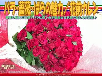 バラ・薔薇・ばらの魅力(2)/花前カレン画像02