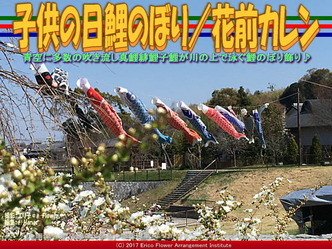 子供の日鯉のぼり(2)/花前カレン画像01