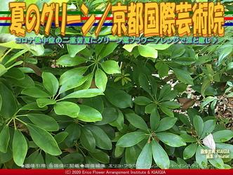夏のグリーン(2)/京都国際芸術院画像01 ▼画像クリックで640x480pxlsに拡大@北洞院エリ子花前カレン