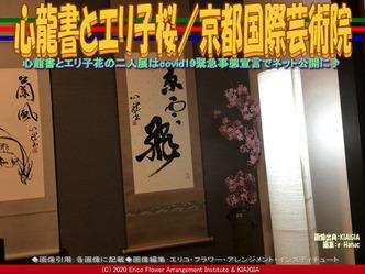 心龍書とエリ子桜(4)/京都国際芸術院画像01 ▼画像クリックで640x480pxlsに拡大@北洞院エリ子花前カレン