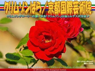 クリムゾンばら(2)/京都国際芸術院画像02 ▼画像クリックで640x480pxlsに拡大@エリ子花前カレン