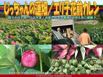 じっちゃんの蓮畑(8)/エリ子花前カレン画像02 ▼画像クリックで640x480pxlsに拡大@エリ子花前カレン
